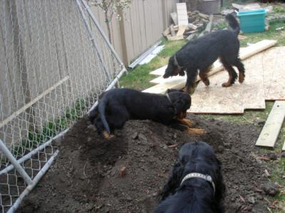 Playing in the dirt while yard under construction